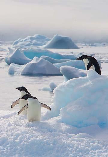 Antarktis | Hurtigruten