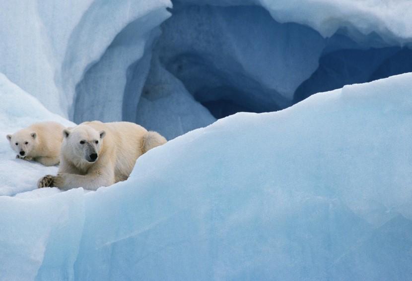 Spetsbergen, Norges arktiska krona; en ö skapad av vinden, havet, isen och snön. Dess läge skapar en biologisk hot spot, där det kalla Norra ishavet möter den varmare Golfströmmen. Om vi har tur kan vi få se en isbjörn på säljakt.