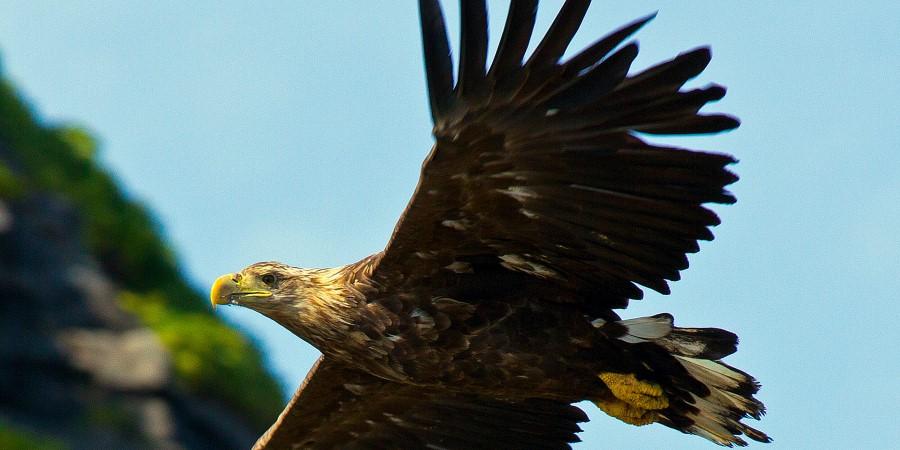 6b birdwatching safari_05_gjesvær ørnaah8w1285.jpg